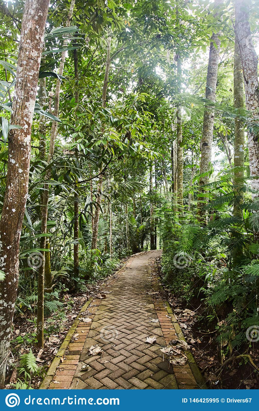 Trajeto rochoso estreito na selva