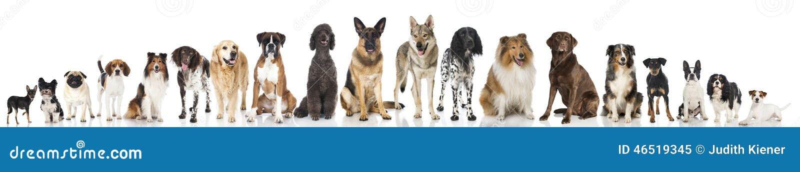 Trakenów psy
