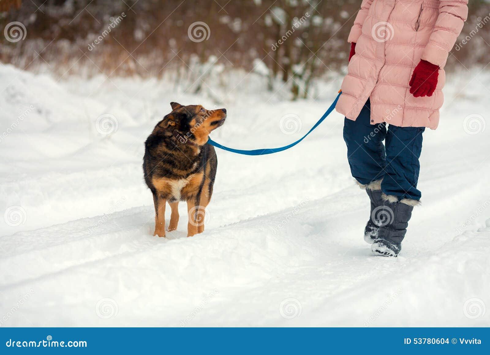 Trakenu Bruxellois psi gryfonu kobiety potomstwa