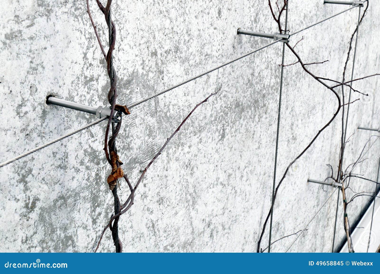 Traliccio Del Cavo Immagine Stock Immagine Di Landscaping 49658845