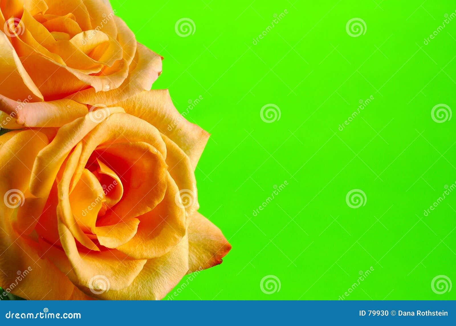 Trame de Rose