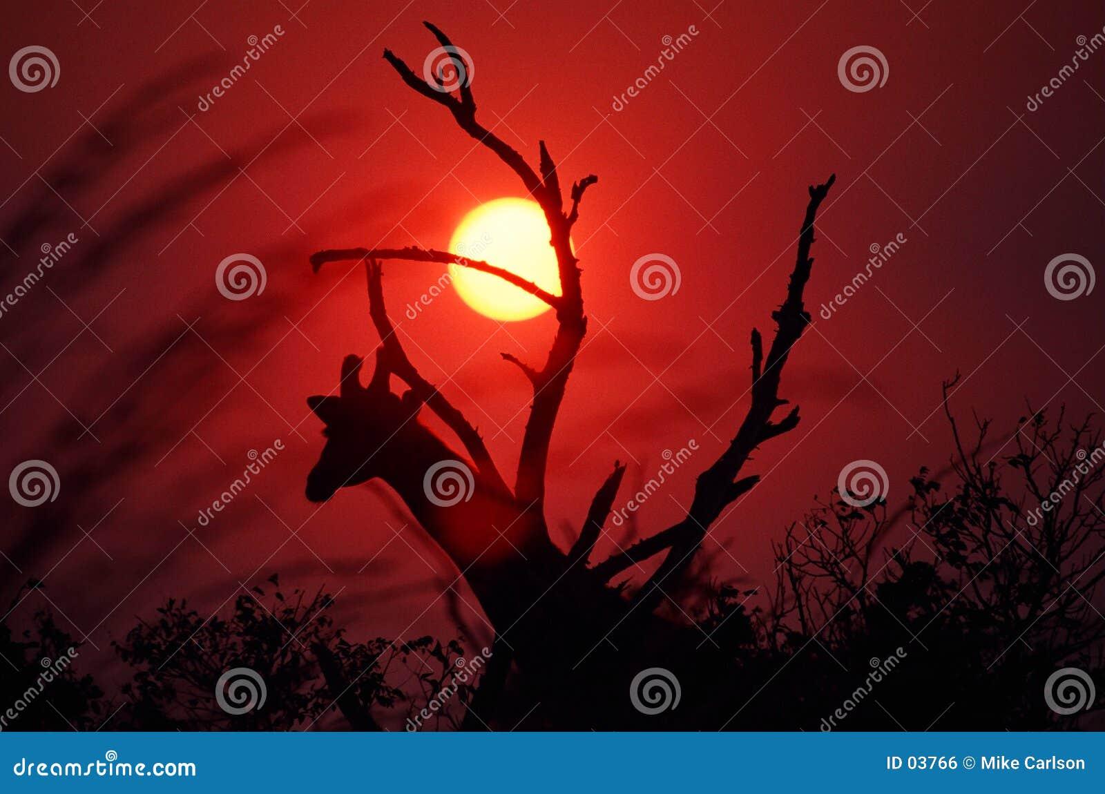 Download Tramonto africano fotografia stock. Immagine di testa, sfera - 3766