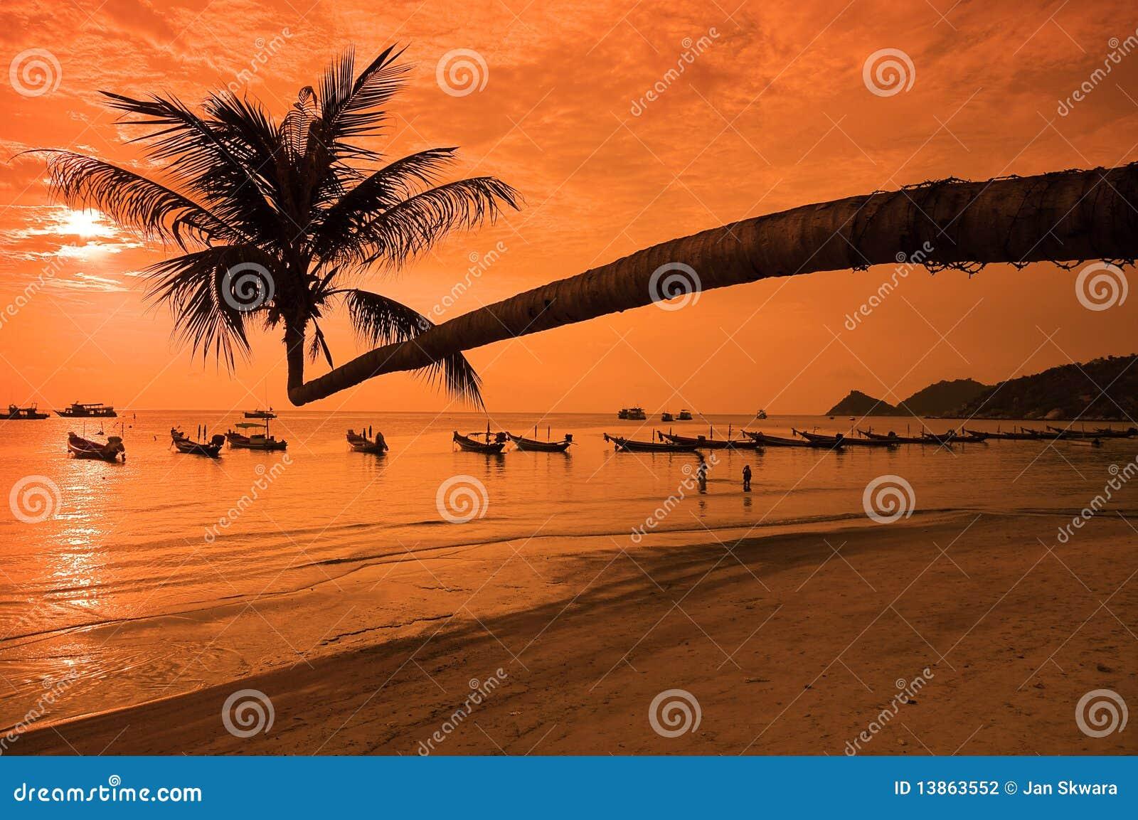 Tramonto con la palma e le barche sulla spiaggia tropicale for Disegni di casa sulla spiaggia tropicale