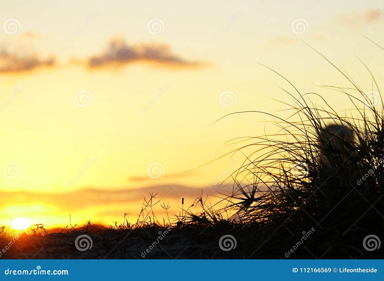 Tramonto del fondo dietro le dune di sabbia della spiaggia