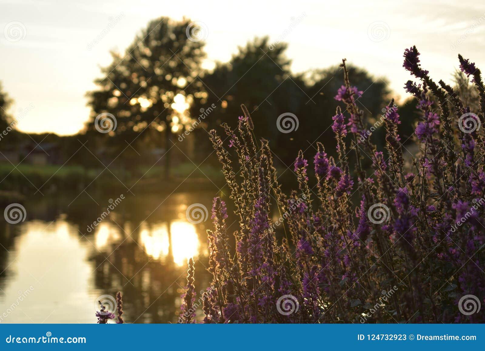 Tramonto del lago con le piante e un fondo blury