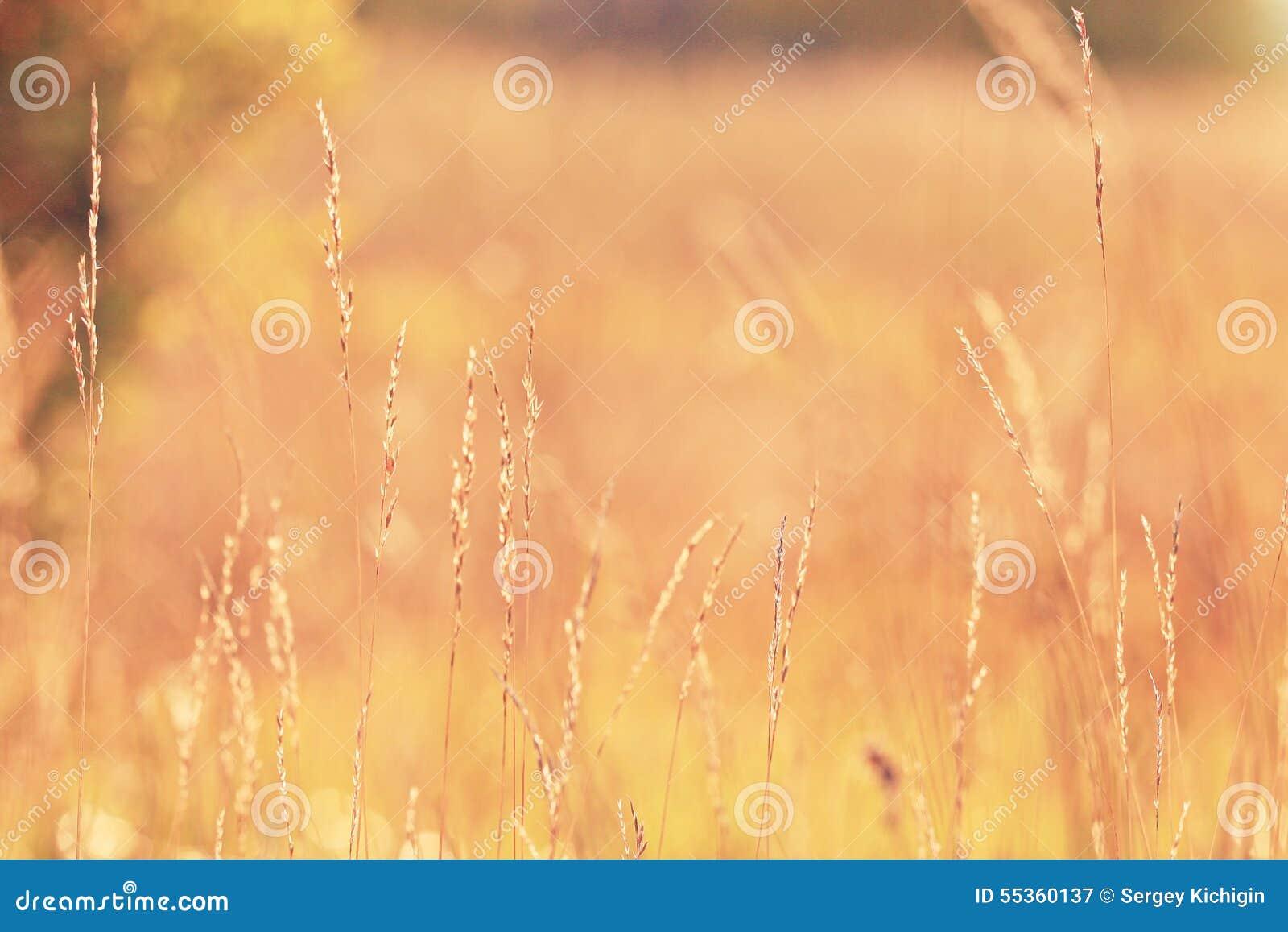 Tramonto dell erba asciutta