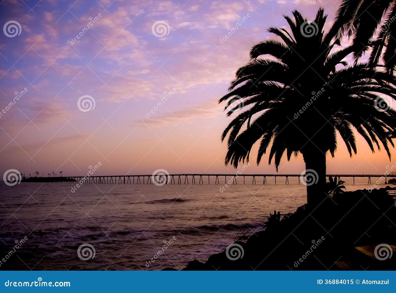 Download Tramonto Della Palma Dell'isola Di Rincon Immagine Stock - Immagine di siluetta, litoraneo: 36884015