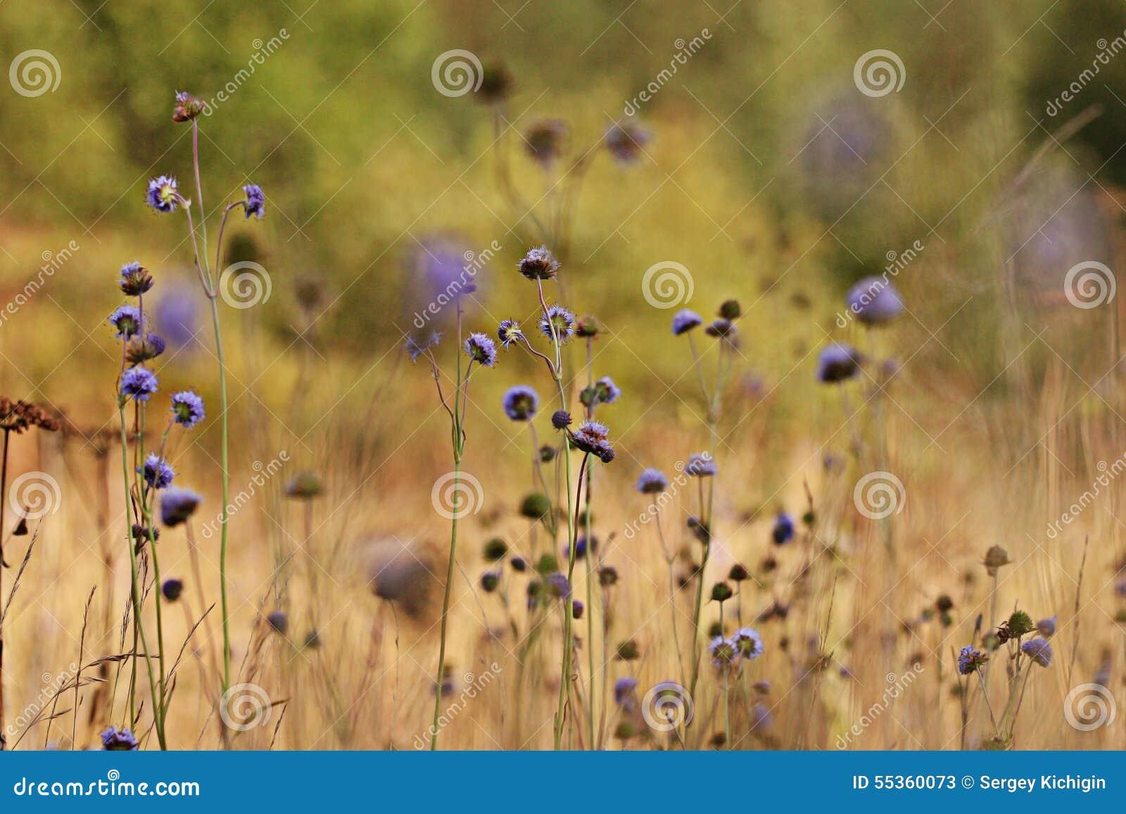 Tramonto di autunno dei Wildflowers