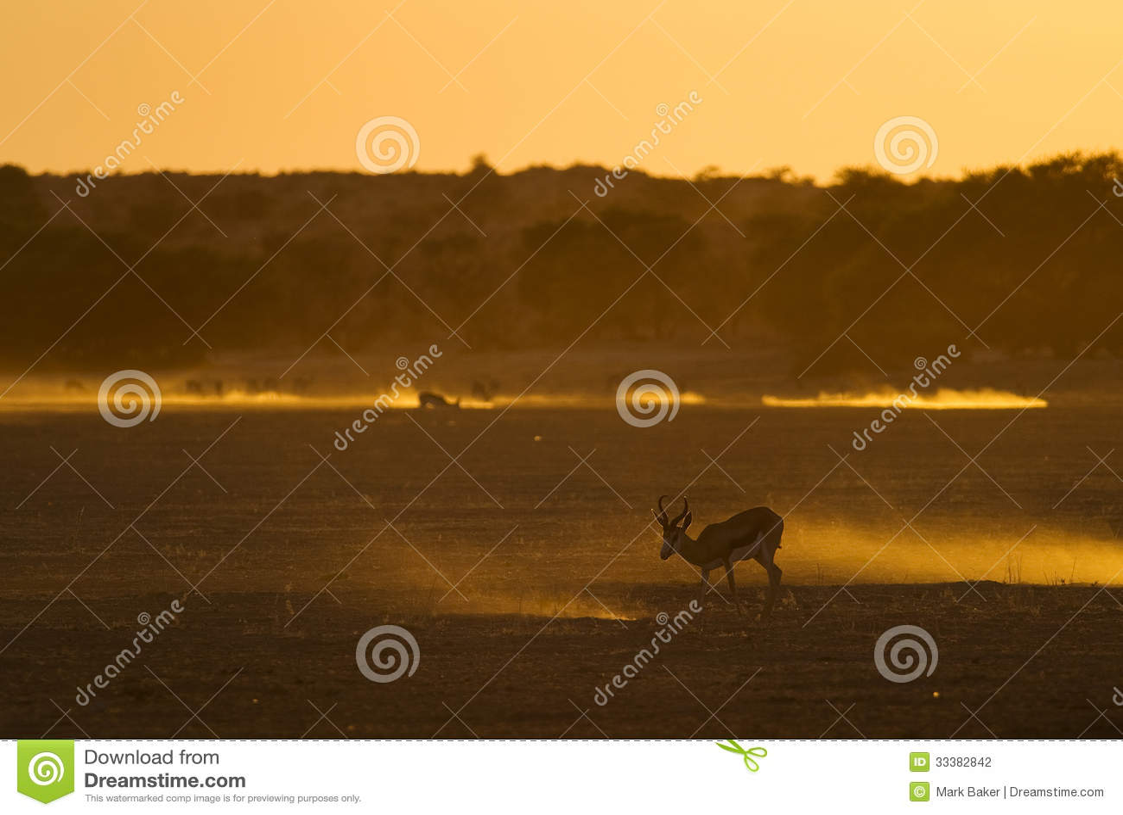 Tramonto di Kalahari con l antilope saltante