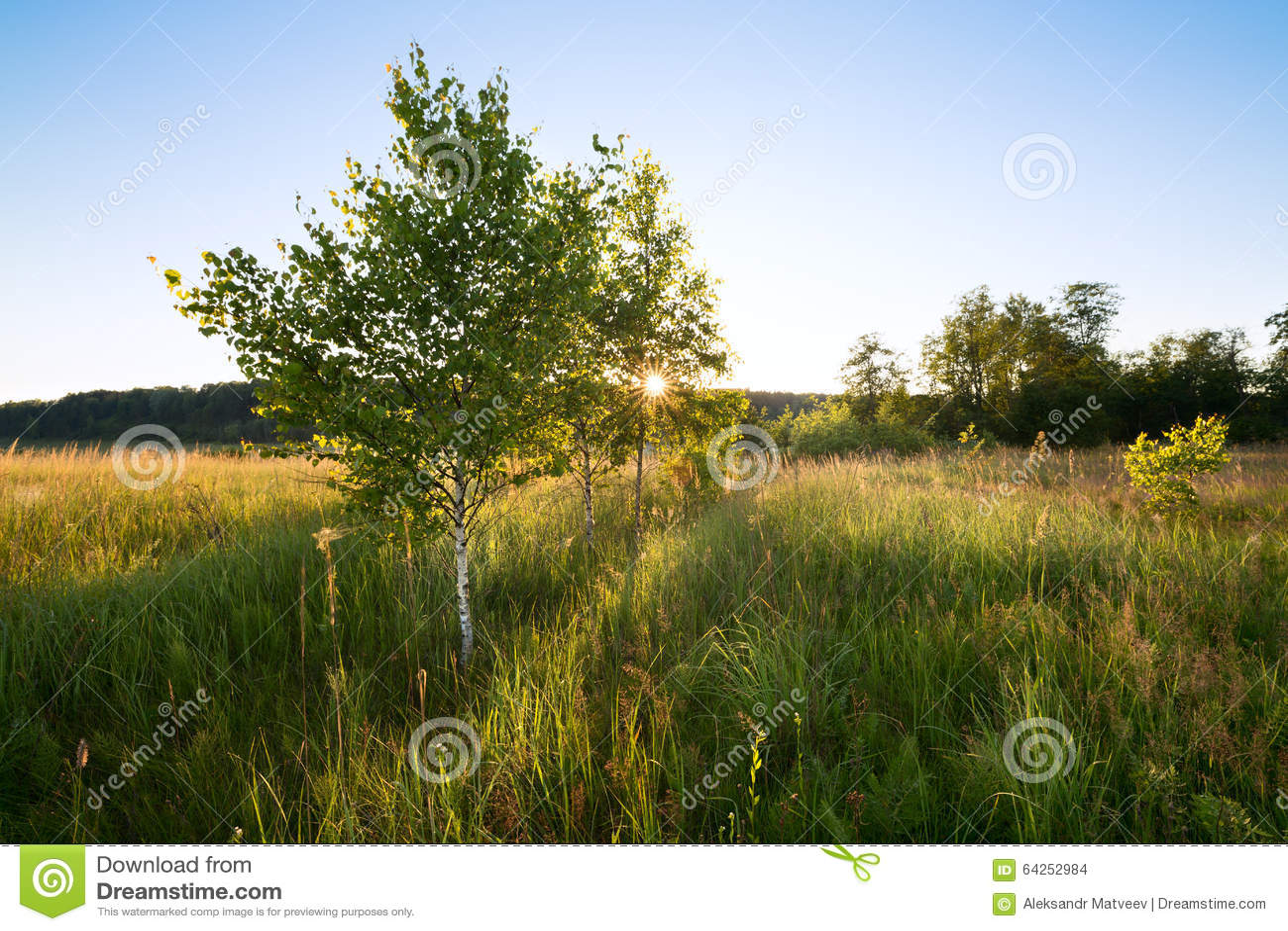 Tramonto Glade della foresta I rami degli alberi