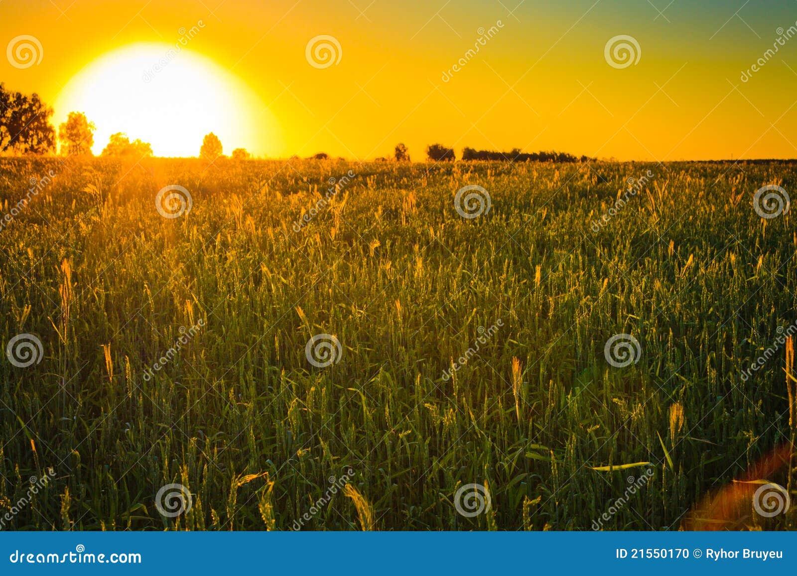 Tramonto luminoso sopra il campo verde.