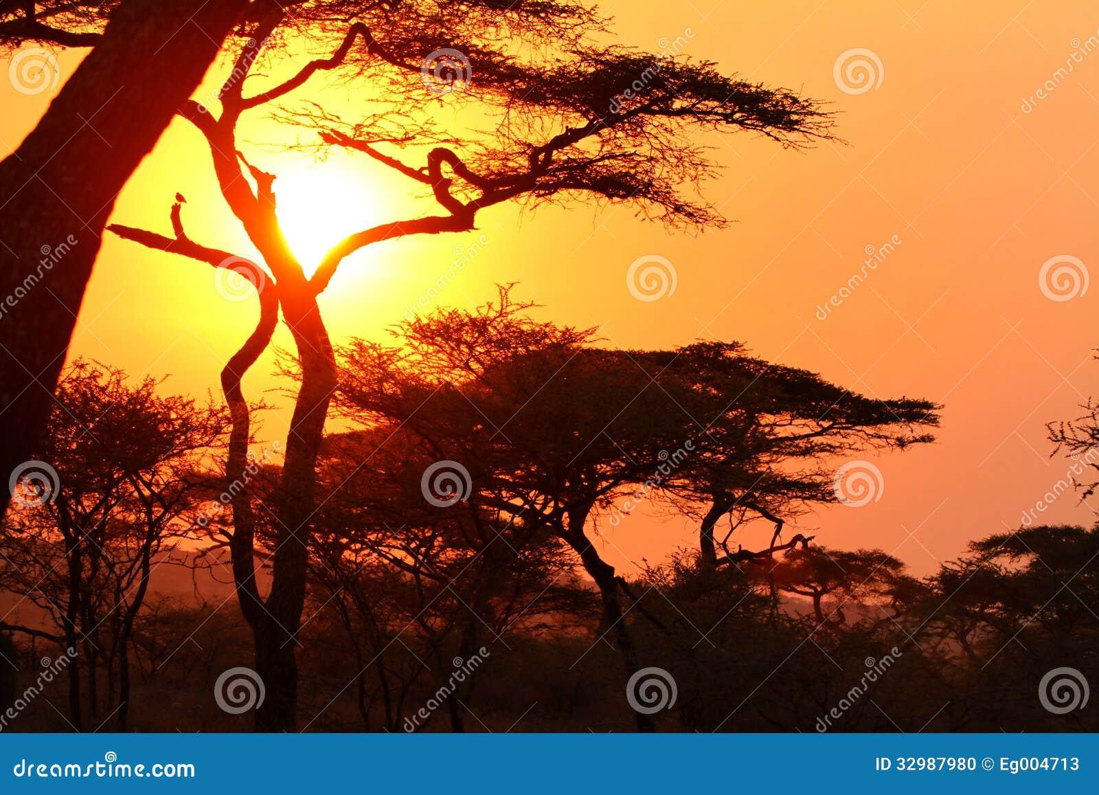 Tramonto nel cespuglio africano