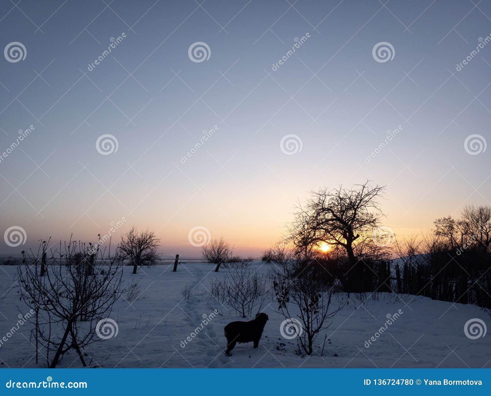 Tramonto nell inverno ed in cane nero