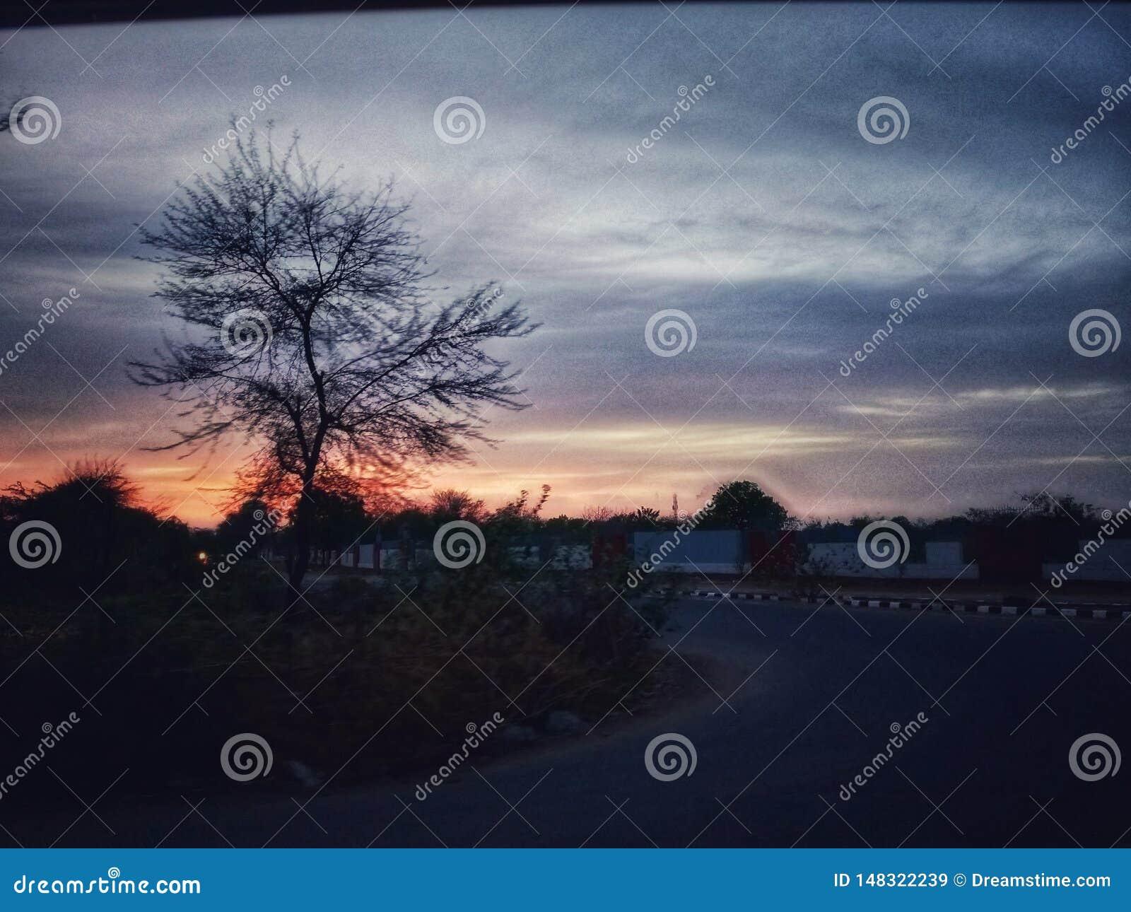 Tramonto in nuvola con il movimento dell albero