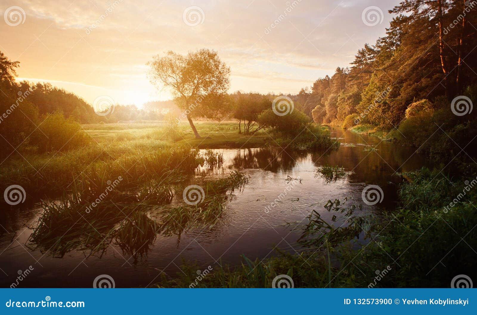 Tramonto sopra il fiume nel bello tramonto drammatico luminoso della foresta sopra il fiume con la foresta lungo la riva del fium