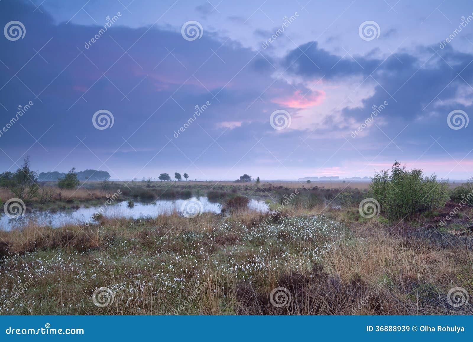 Download Tramonto Sopra La Palude Di Estate Immagine Stock - Immagine di rurale, cespuglio: 36888939