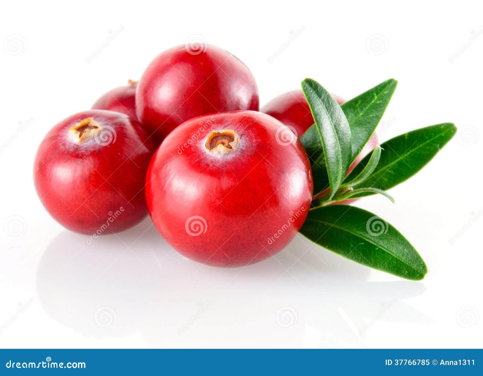 Tranbär i closeup