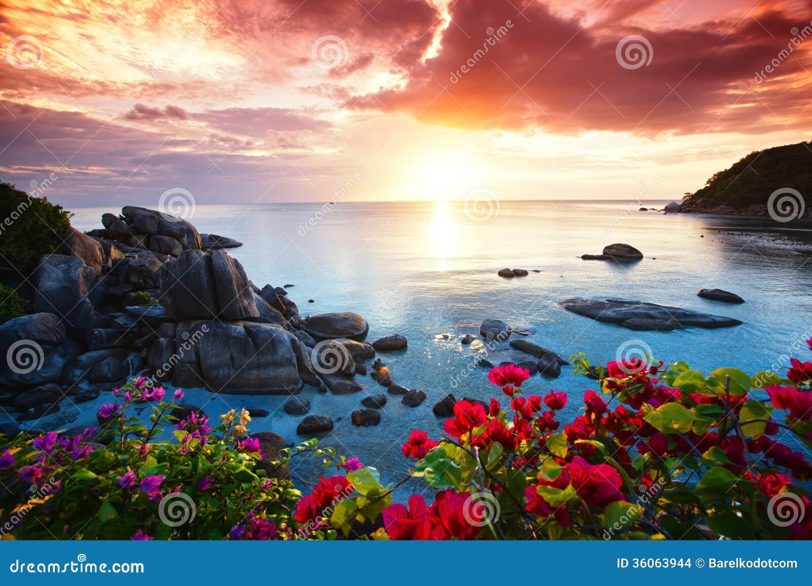Seascape Beach Resort >> Tranquil Beach Resort, Beautiful Morning Glory Stock Images - Image: 36063944