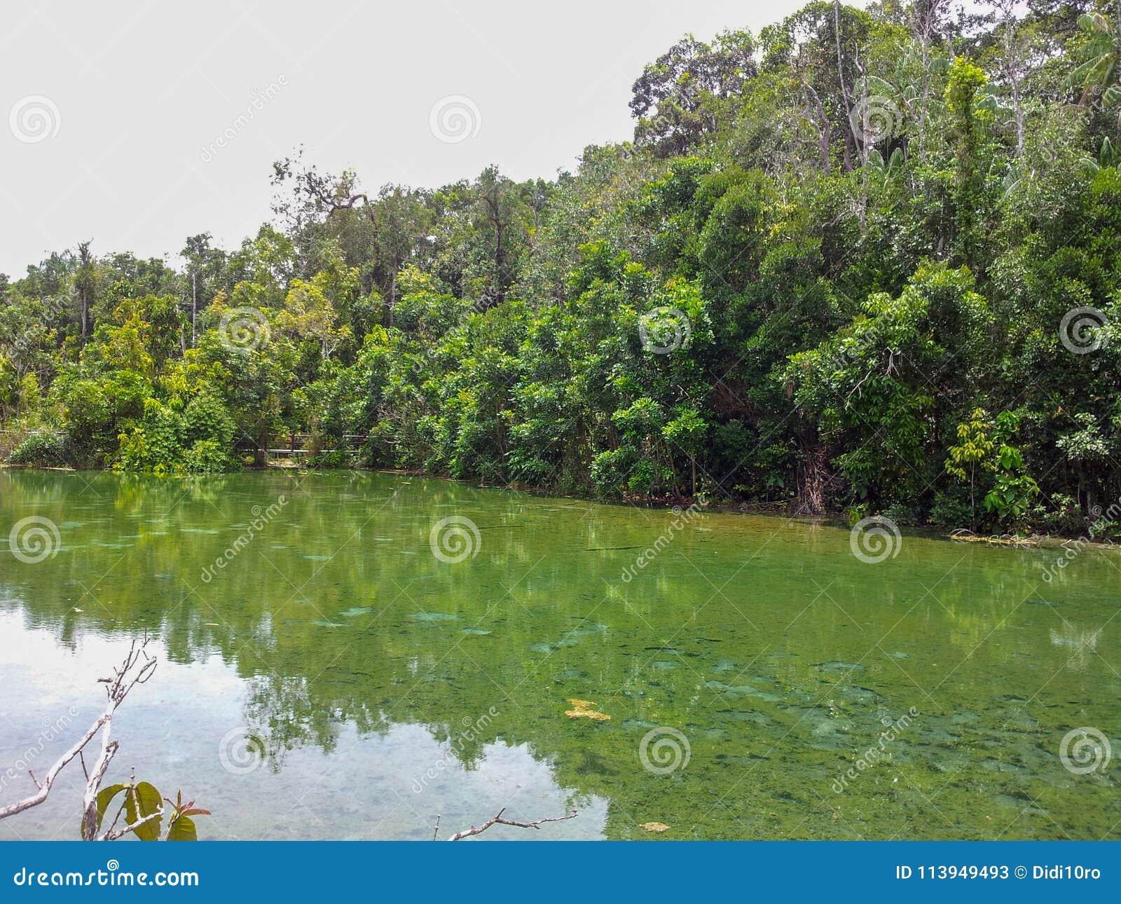 Mangrove Swamp Tha Pom Khlong Song Nam Krabi Thailand Stock