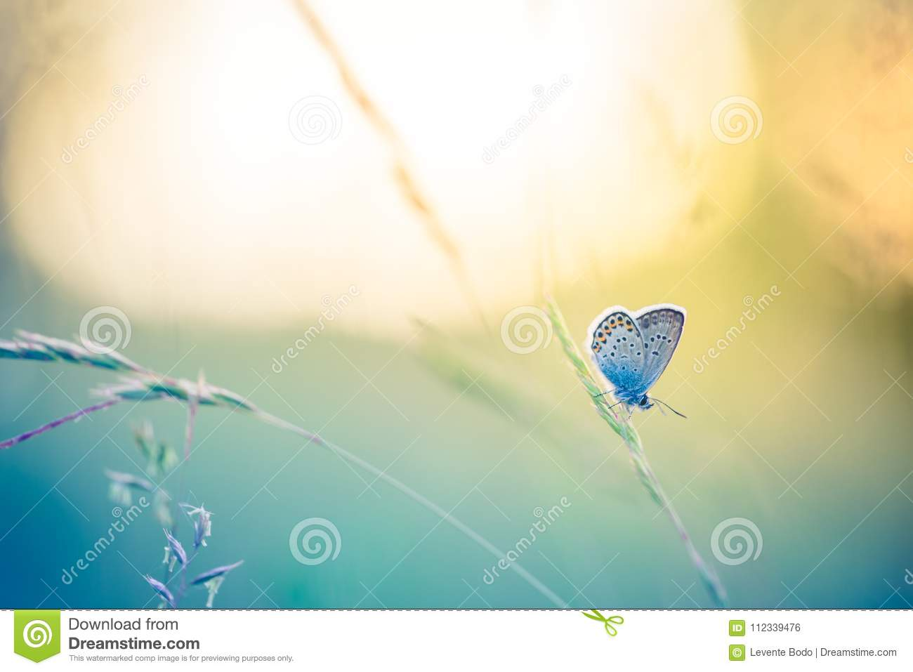 Beautiful nature close-up, summer flowers and butterfly under sunlight. Calm nature background