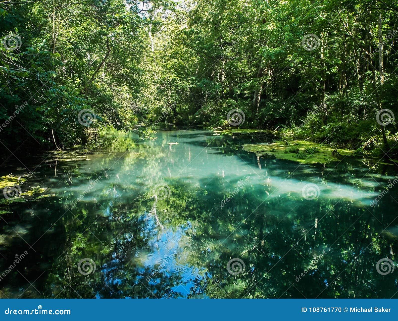 Tranquilité du vert