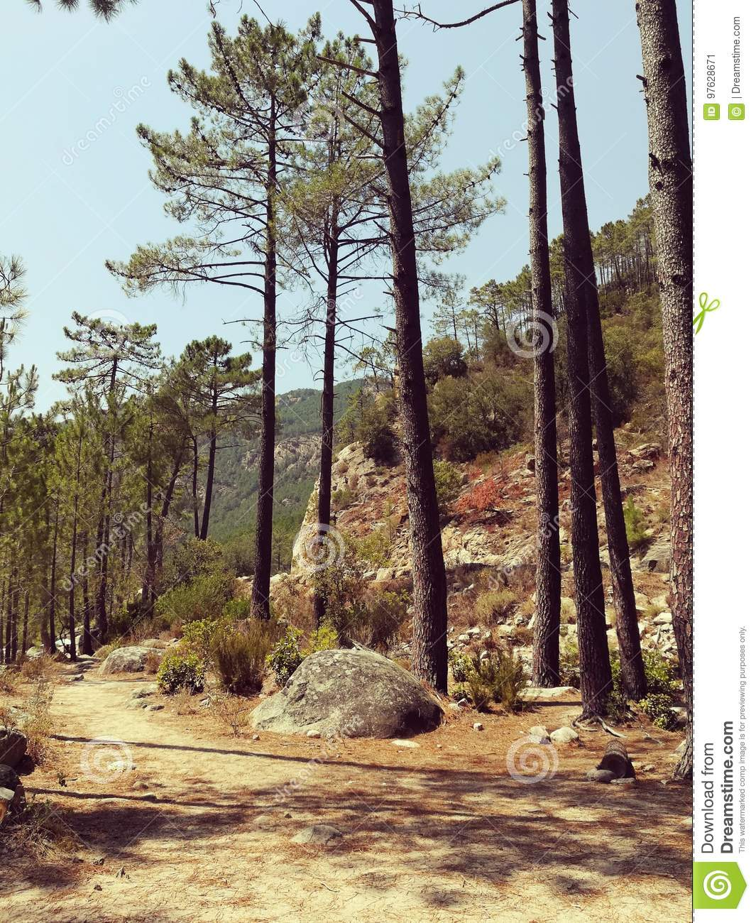 Download Tranquility in forest stock image. Image of tranquility - 97628671