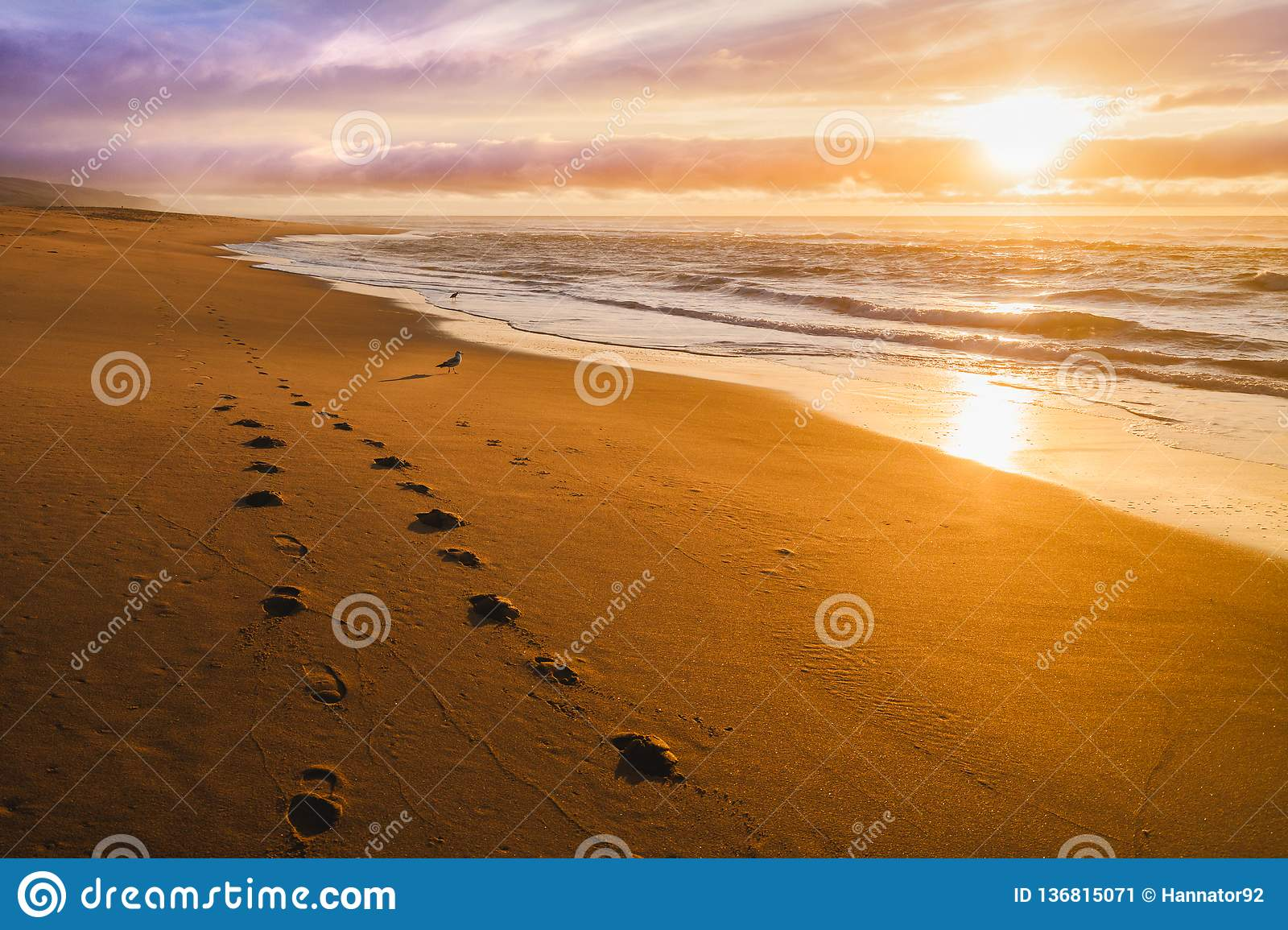 Beautiful sunset on the beach with lonely birds