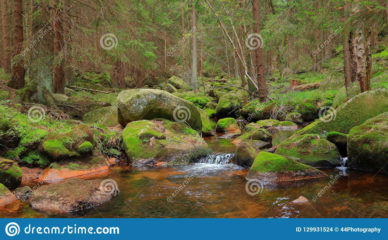 Romantic forest scenery in the Harz mountains, Germany. A tranquil stream and mossy stones in the lush green forest.