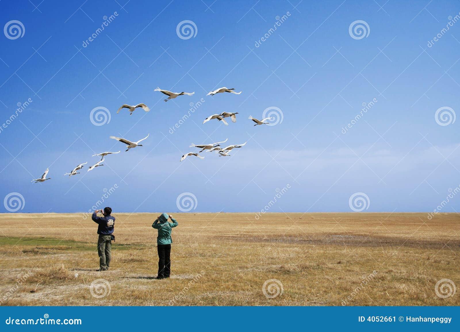 Transfert de observation d oiseau