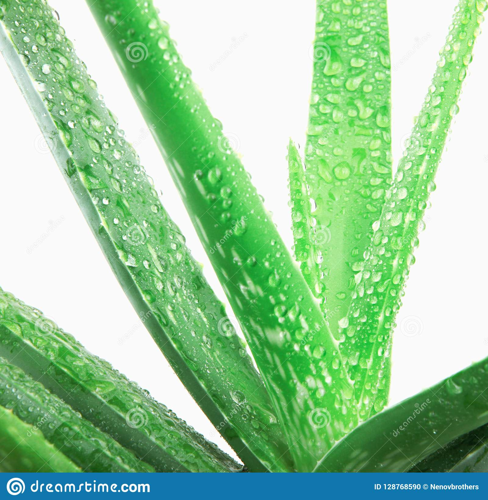 Transfert polaroïd de cactus