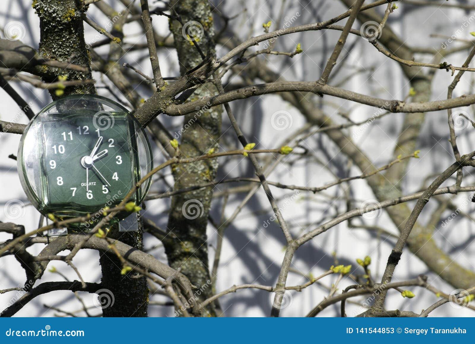 A transição às horas de verão, a chegada da mola, o pulso de disparo no fundo dos ramos com botões de florescência em um ensolara