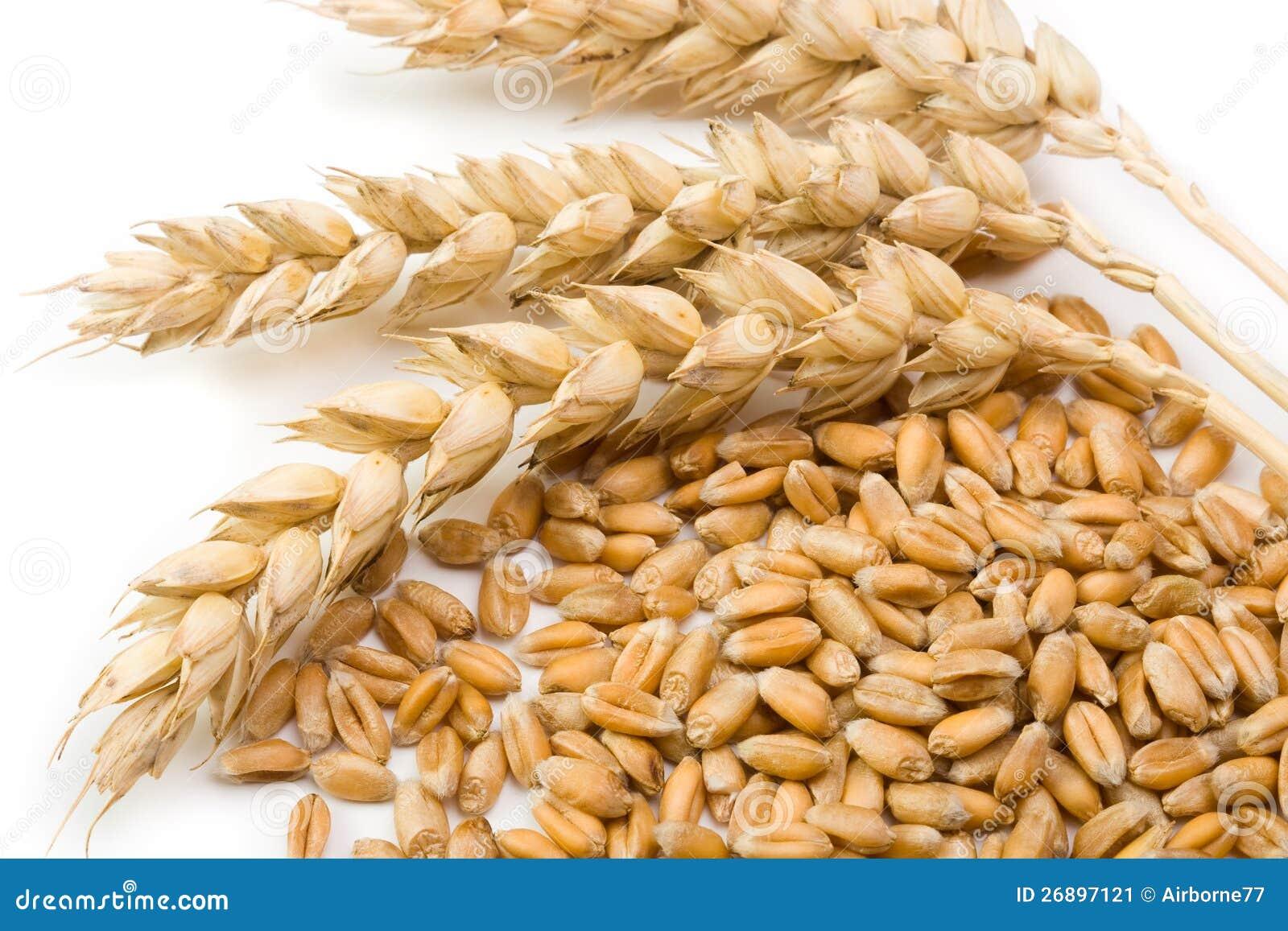 Transitoire de céréale et de blé