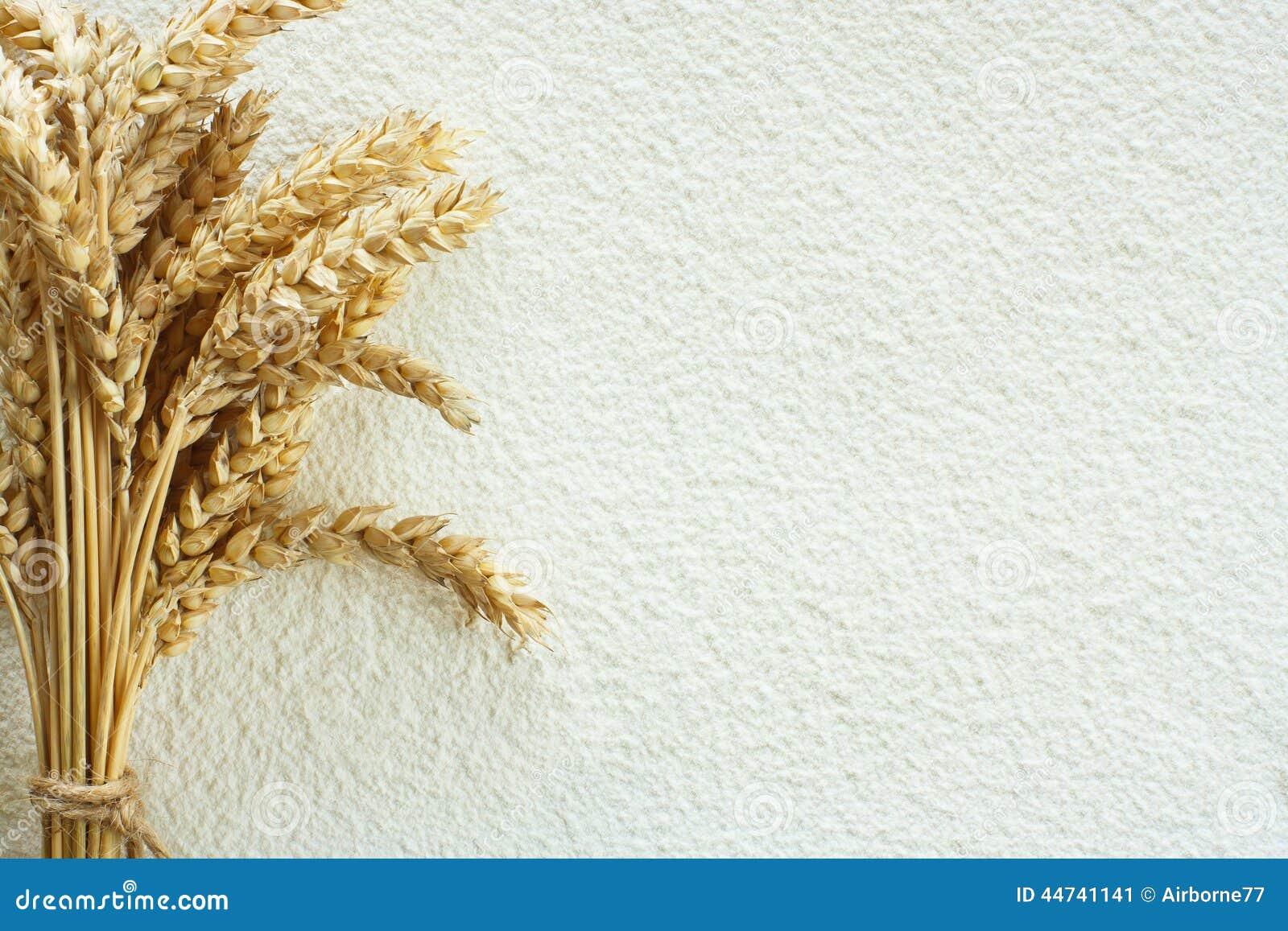 Transitoire de farine de blé et de blé