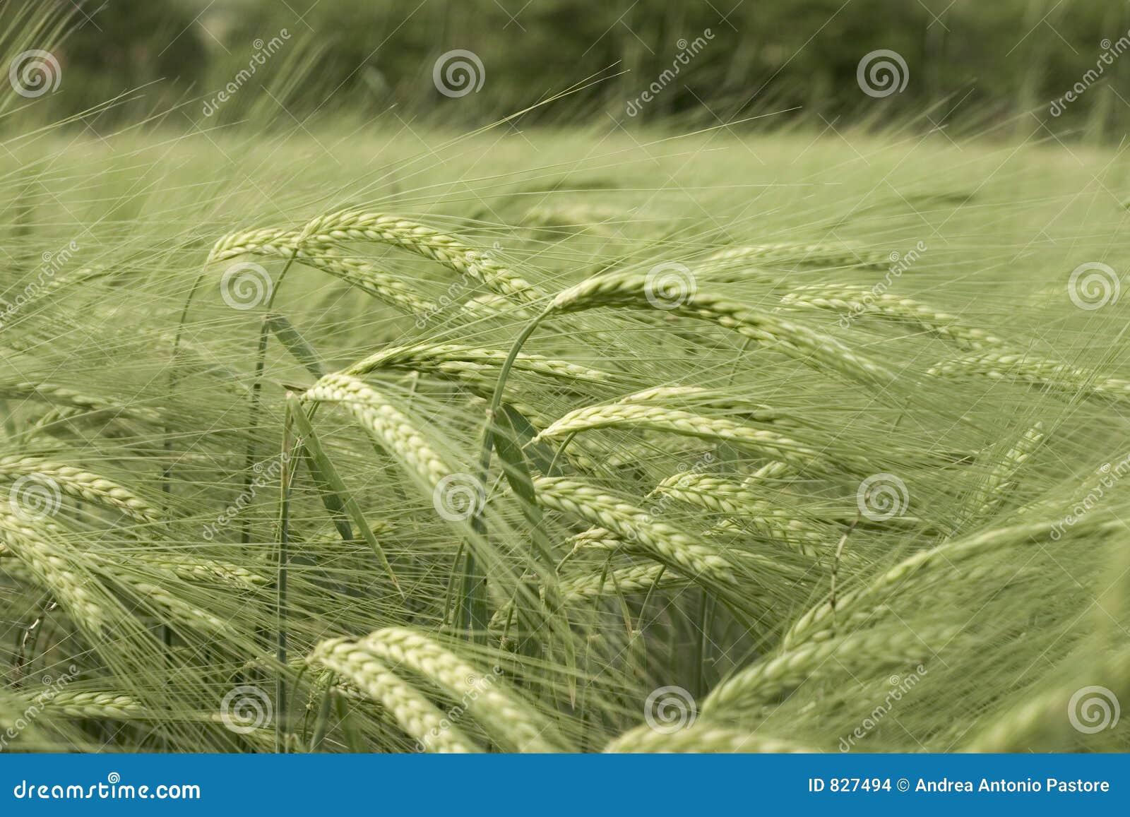 Transitoires dans le vent