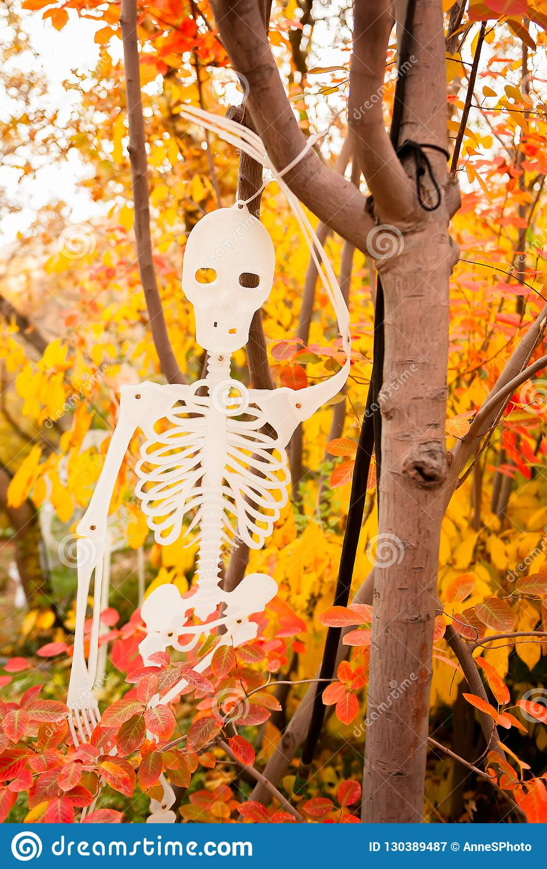 A Halloween skeleton decoration hanging in a tree with colorful leaves in the background.