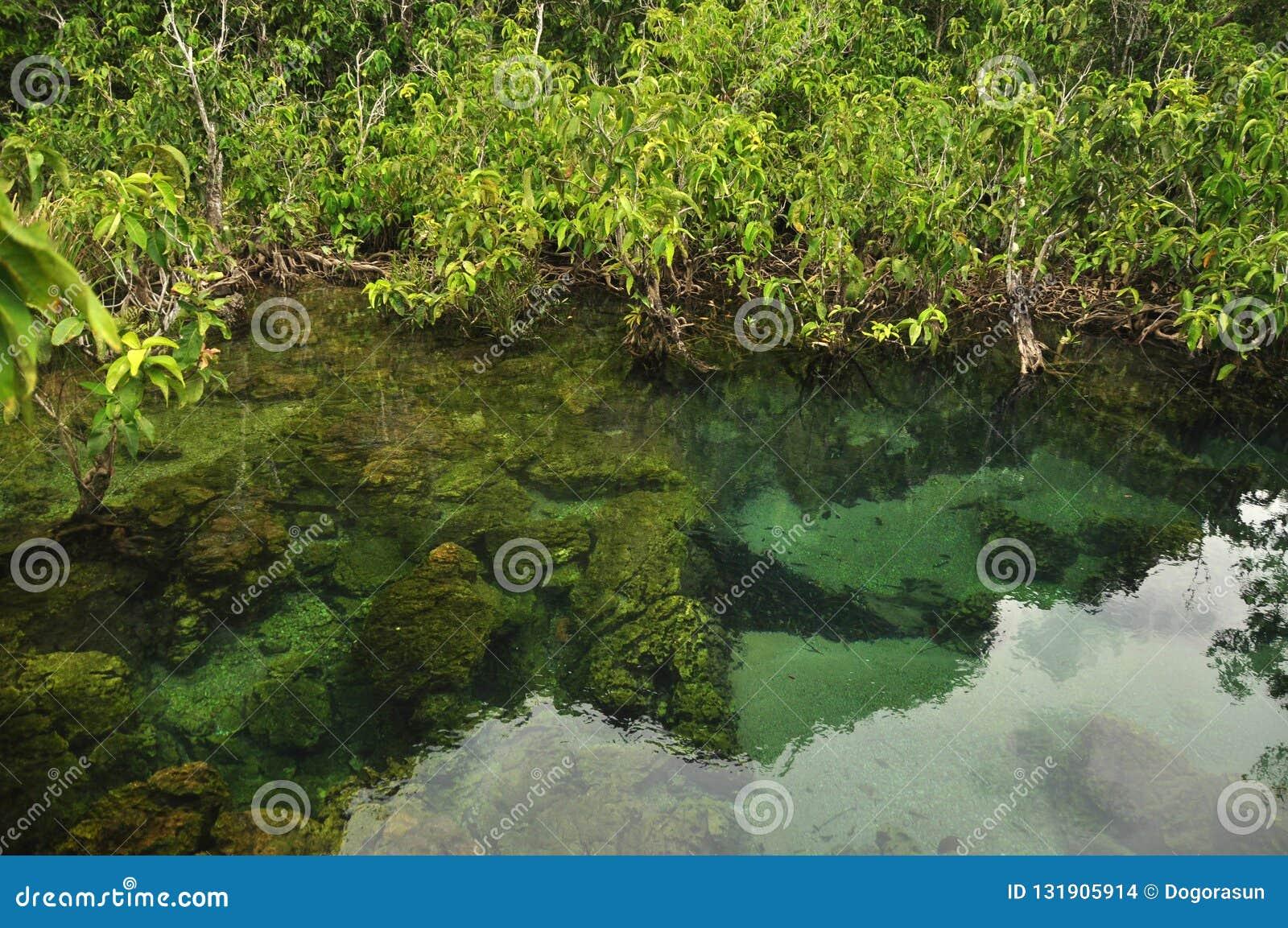 Transparant water in wilde tropische vijver of rivier, van boven schot van duidelijk water in klein meer met rond de wortels van