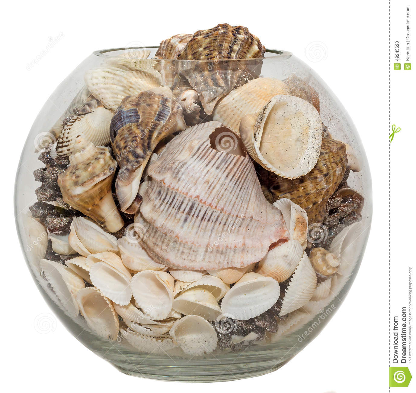 Transparent bowl vase filled with sea shells and pine for What are shells made of