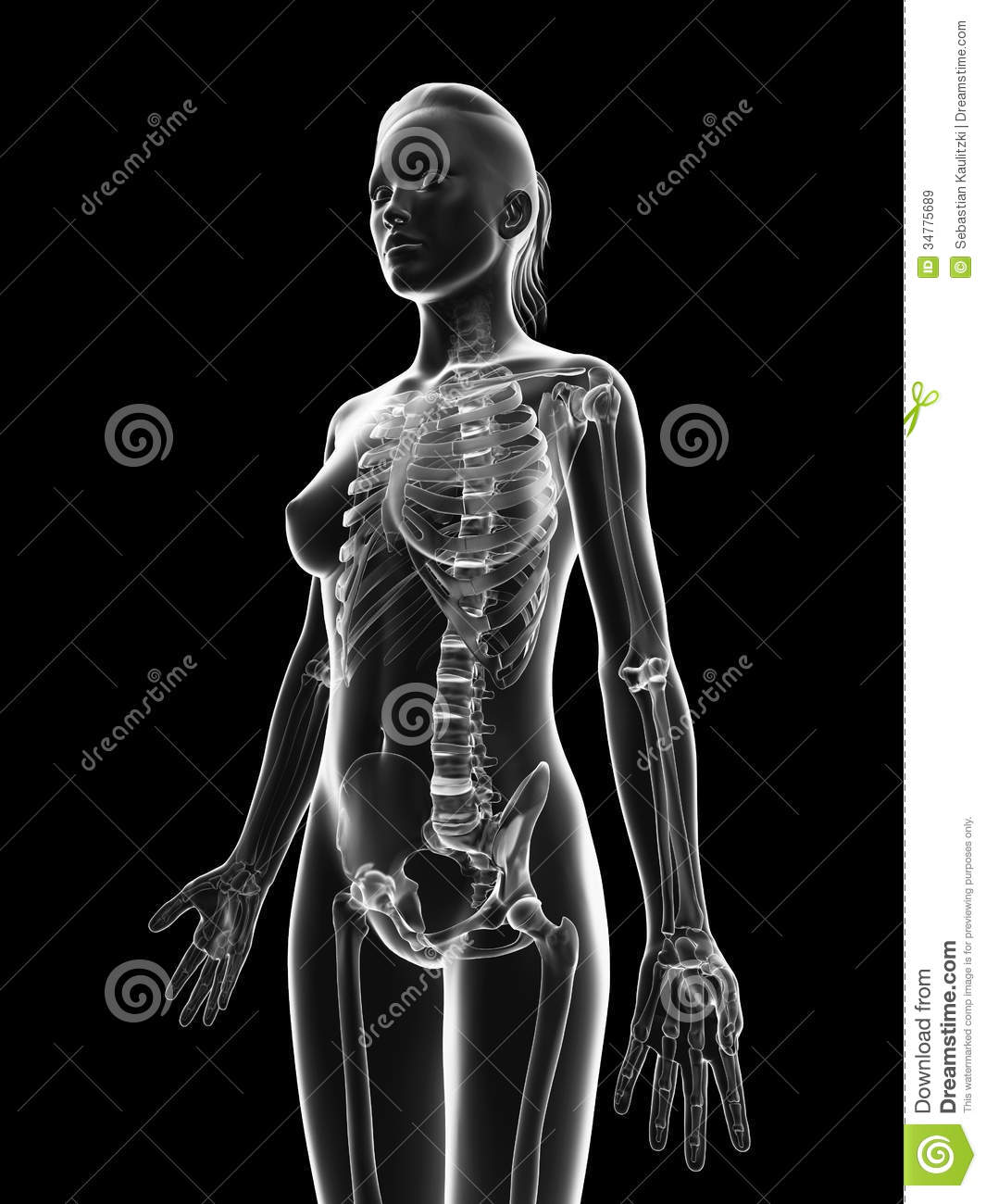 transparent body stock illustrations 21 721 transparent body stock illustrations vectors clipart dreamstime dreamstime com