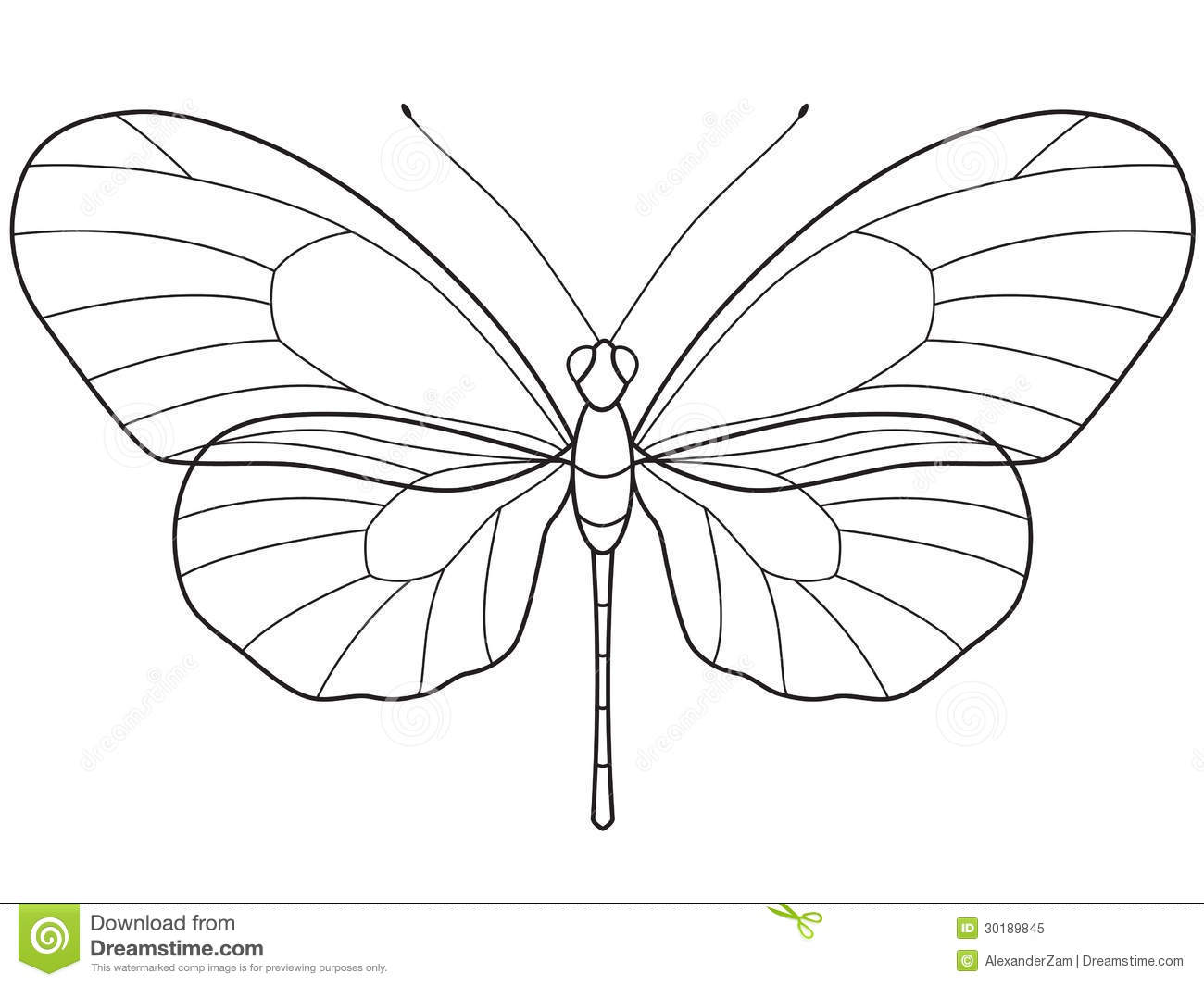 Outline Butterfly Stock Vector Illustration Of Butterfly