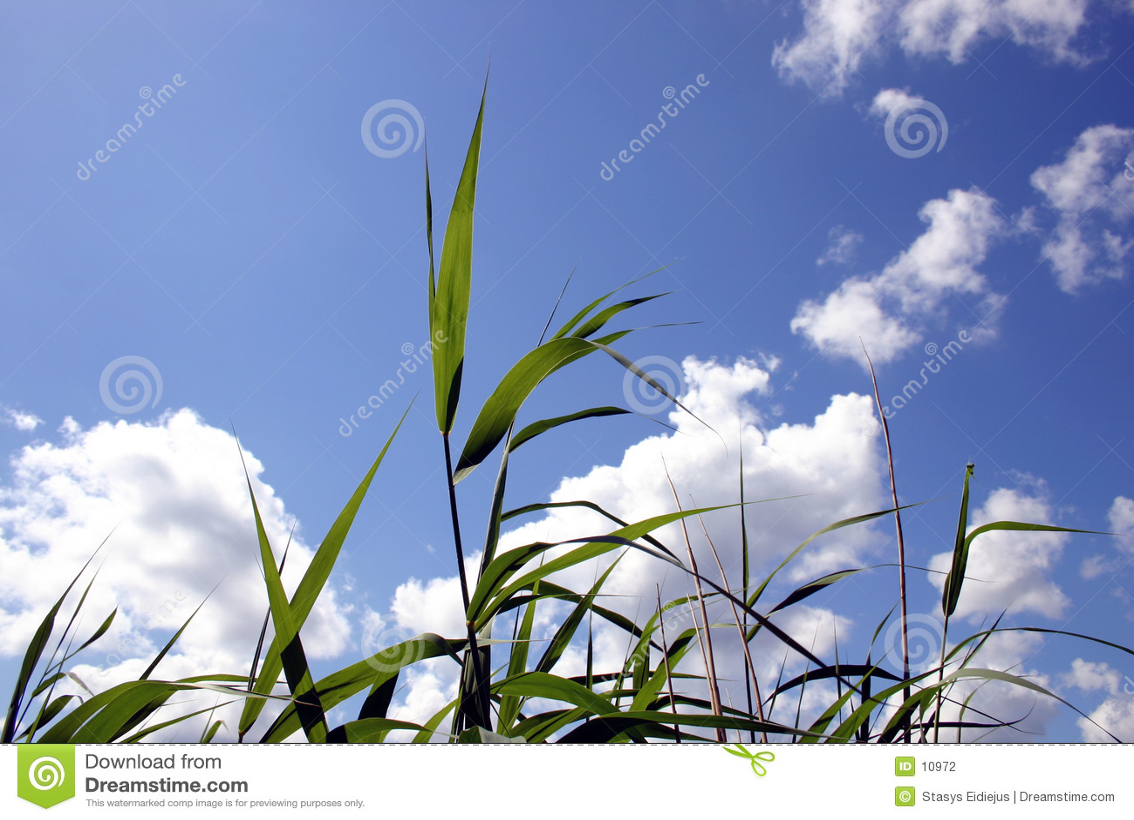 Transparent reeds