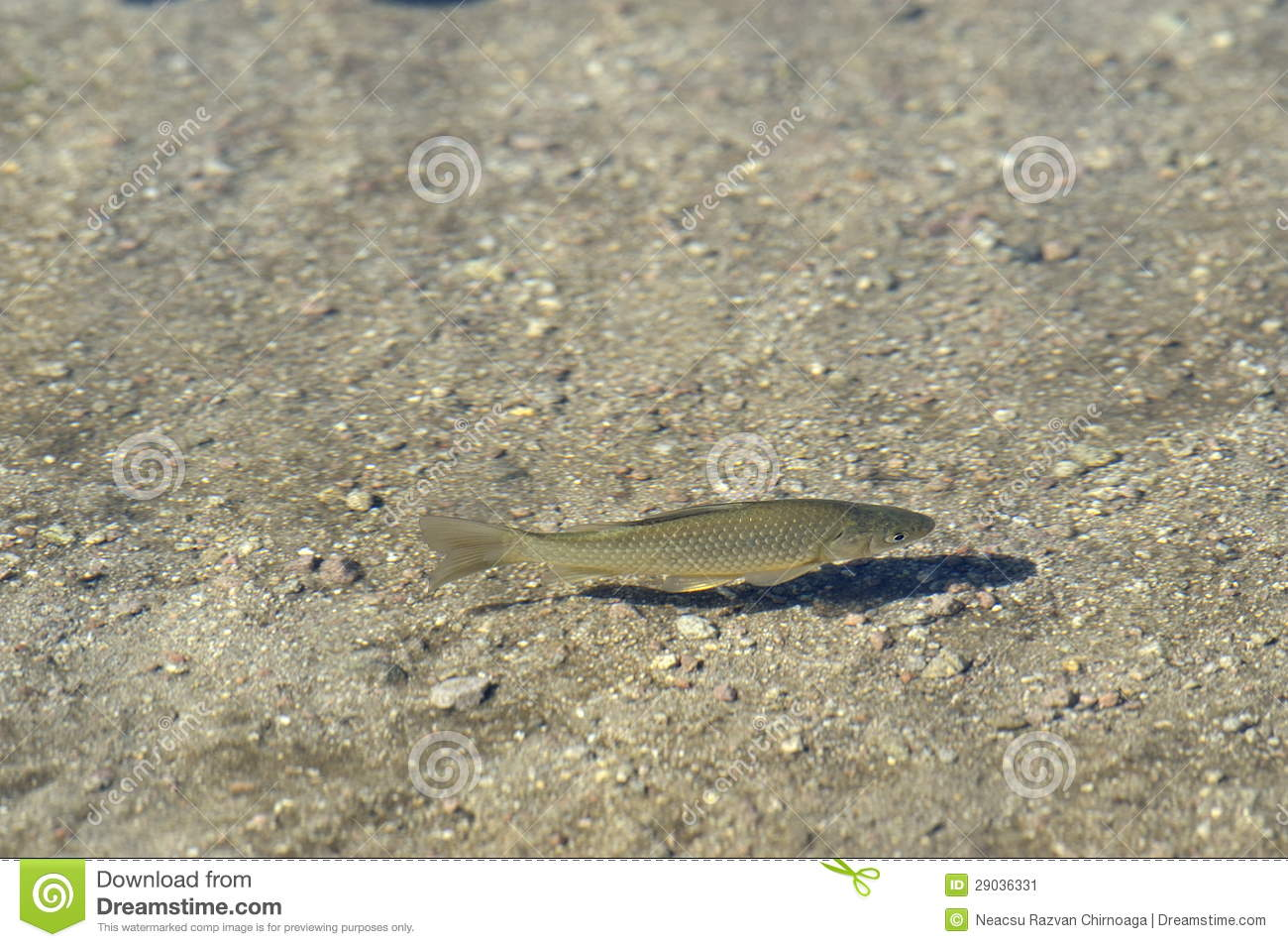 Transparent sea water with fish stock image image 29036331 for Sea water fish