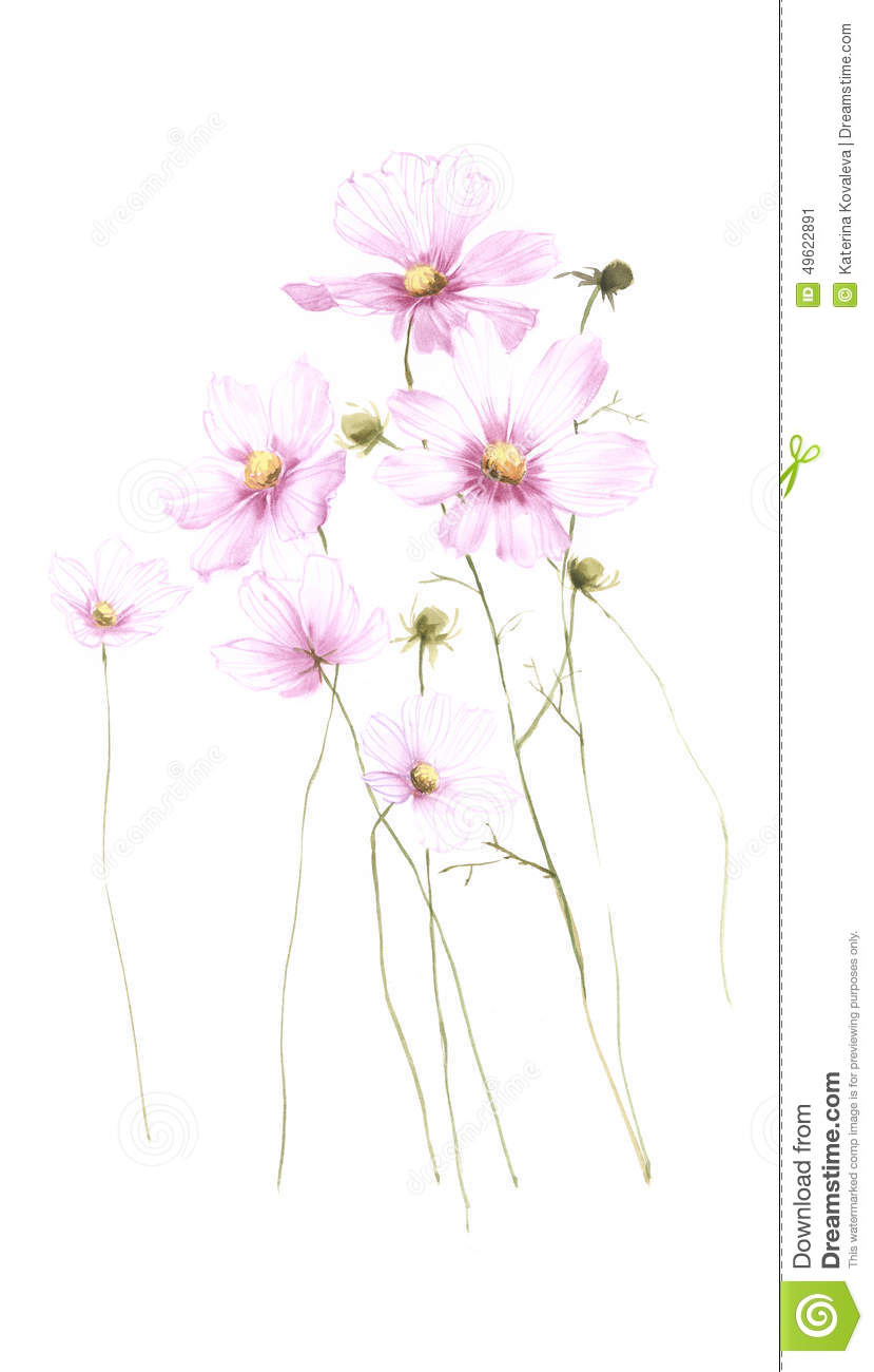 Transparent Wild Flower Carnation Watercolor Isolated On White