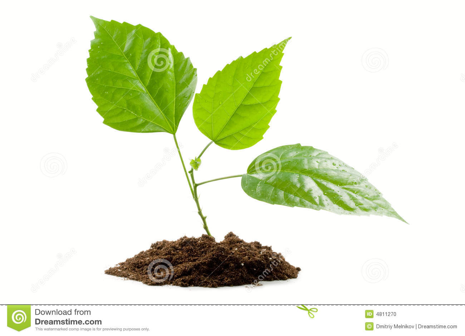 Transplantatie van een boom