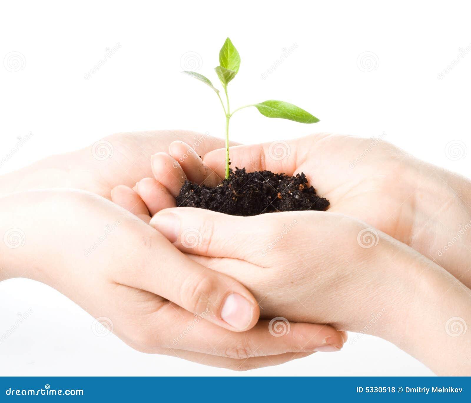 Transplantatie van een van boomwijfje en kinderen handen