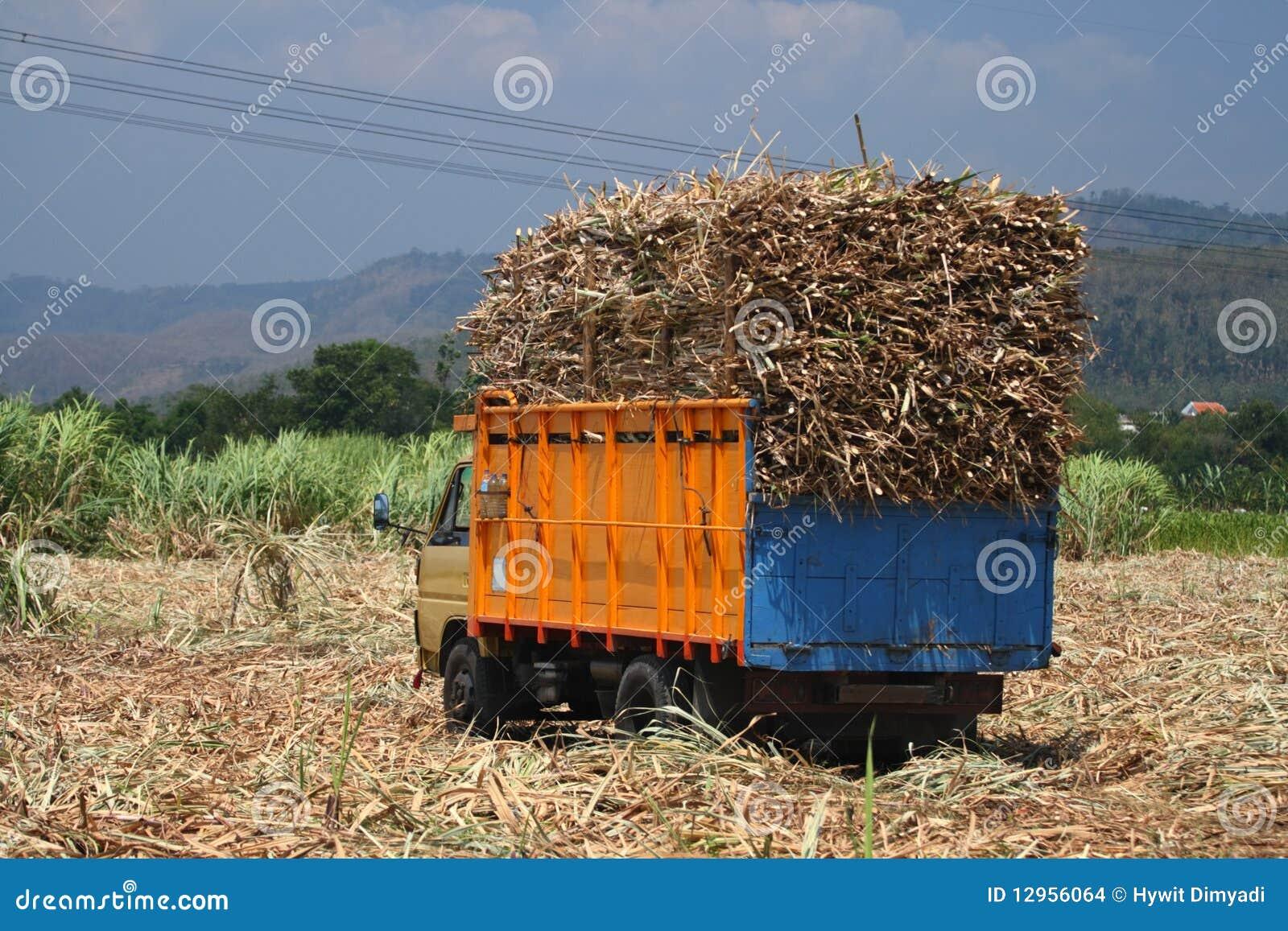 Transport de canne à sucre