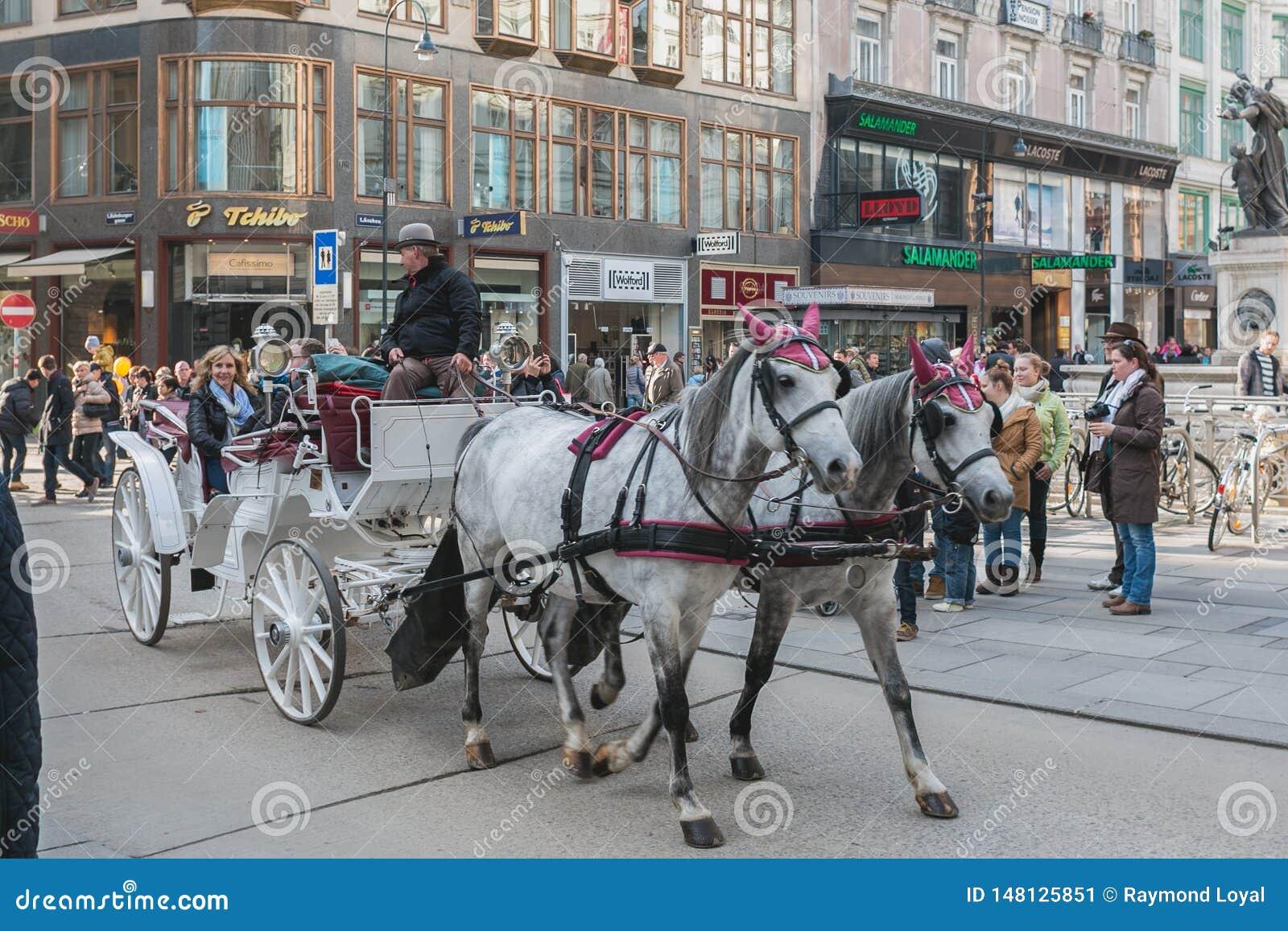 Transporte com cavalos, motorista e turistas em Viena em uma excurs?o sightseeing em torno da cidade