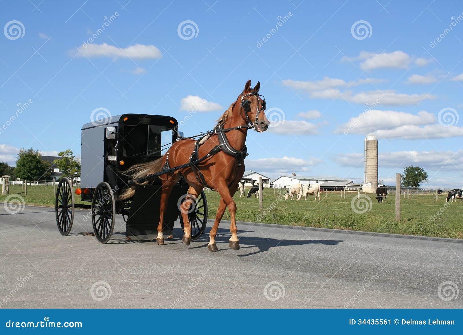 Transporte puxado a cavalo de Amish