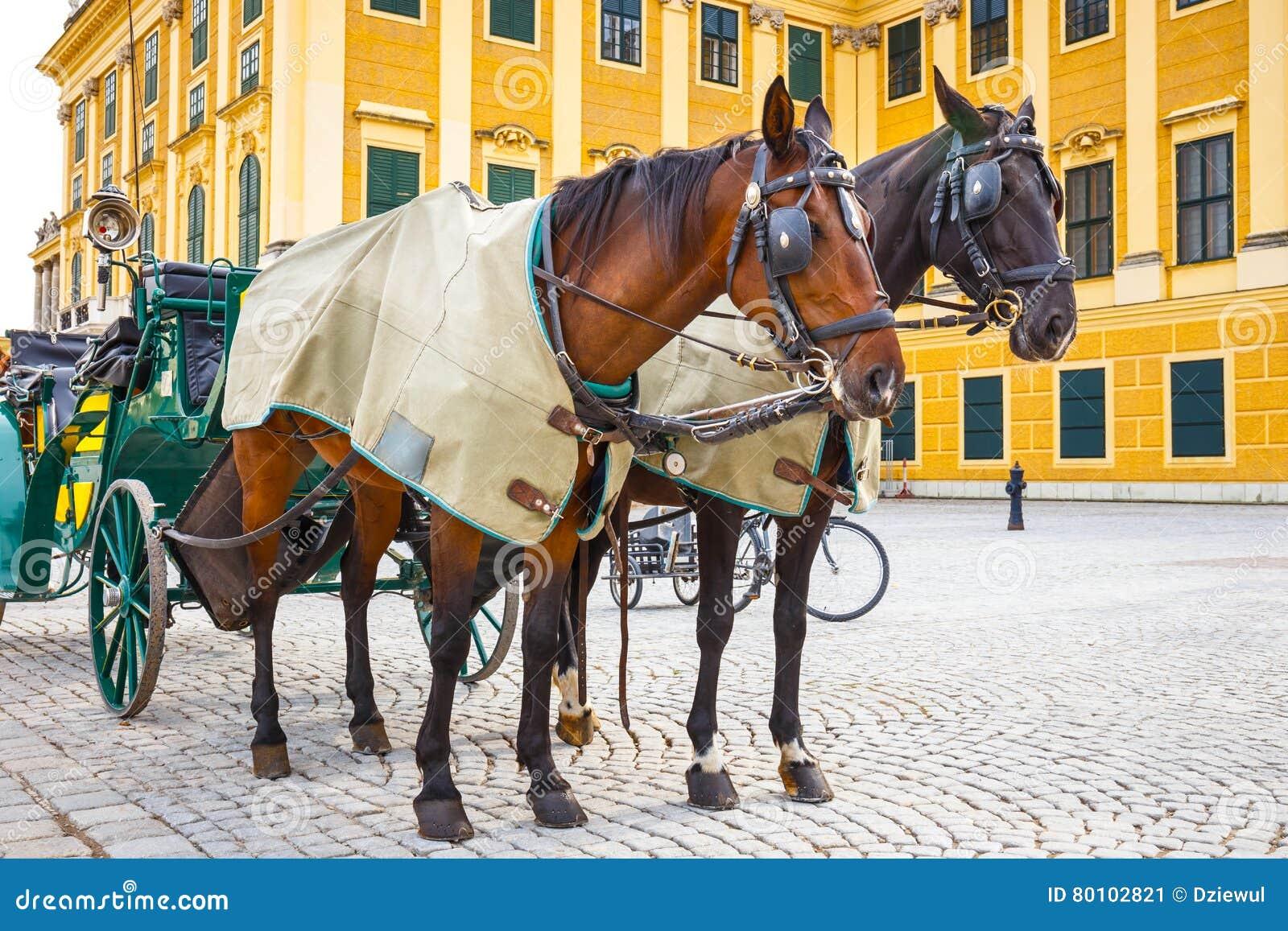 Transportes do cavalo no quadrado principal do palácio de Schonbrunn em Viena