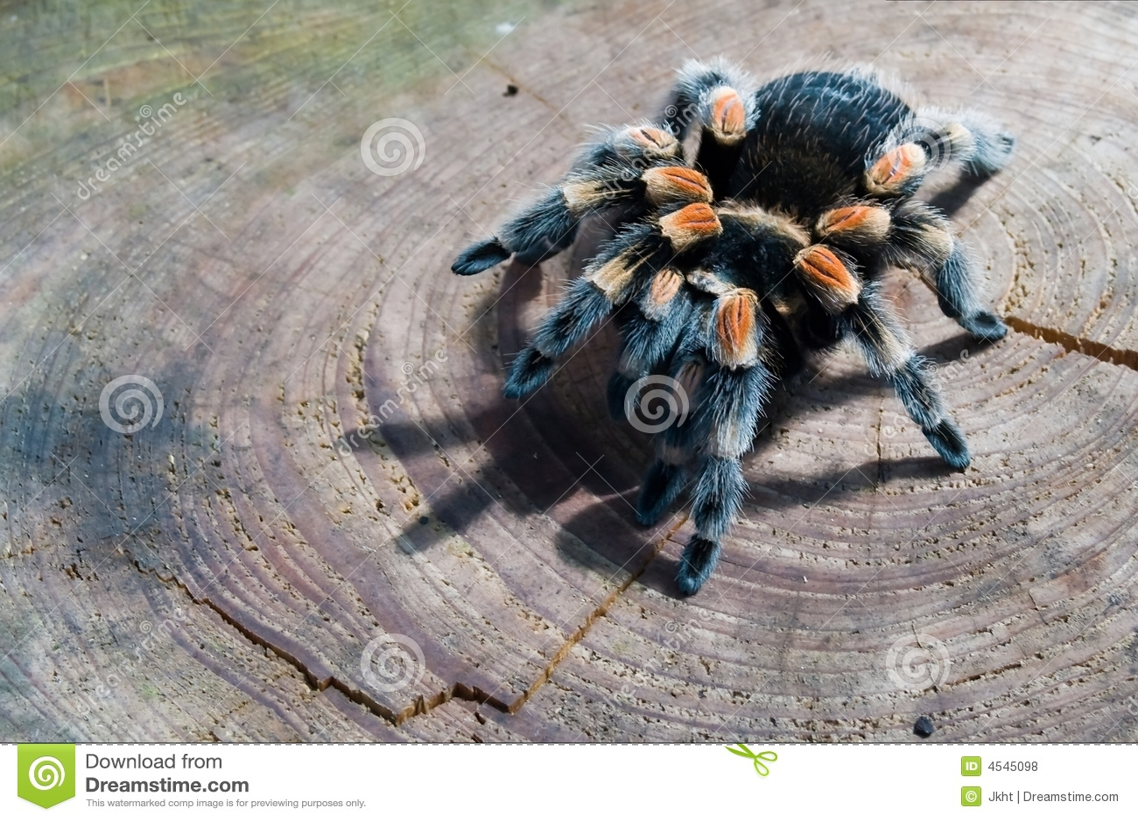 door spider ... & Trap-door Spider Royalty Free Stock Photos - Image: 4545098 Pezcame.Com