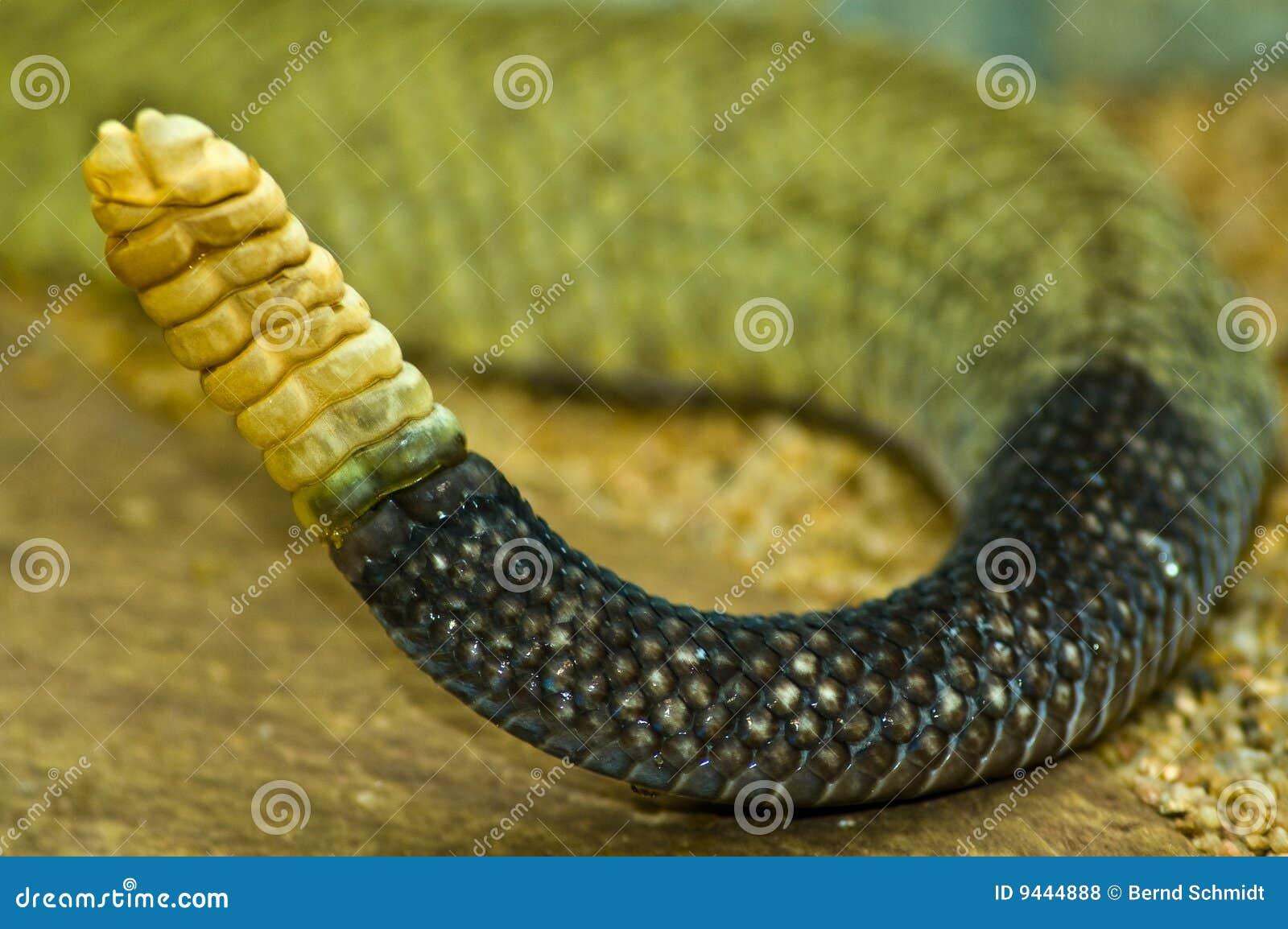 Asombroso Colorear Serpiente De Cascabel Elaboración - Dibujos Para ...